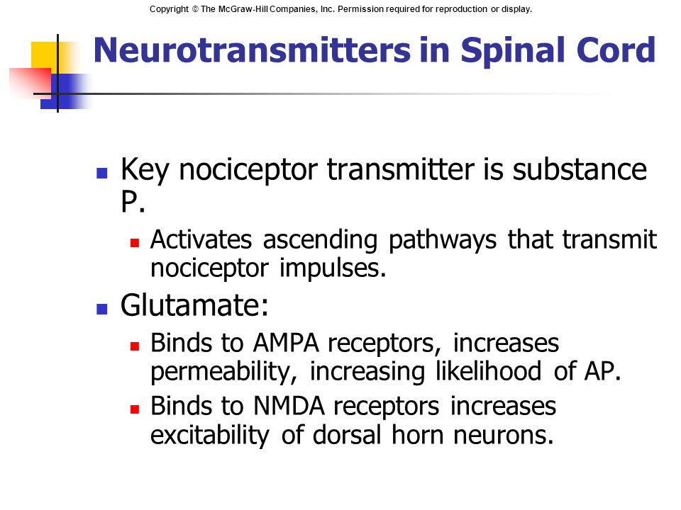 Neurotransmitters in Spinal Cord