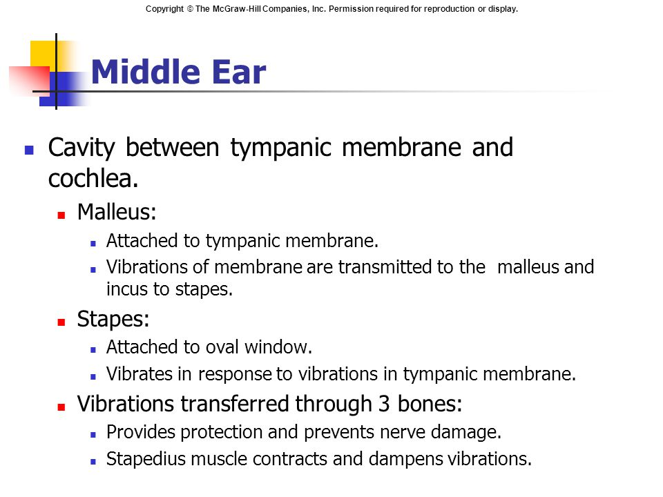 Middle Ear Cavity between tympanic membrane and cochlea. Malleus: