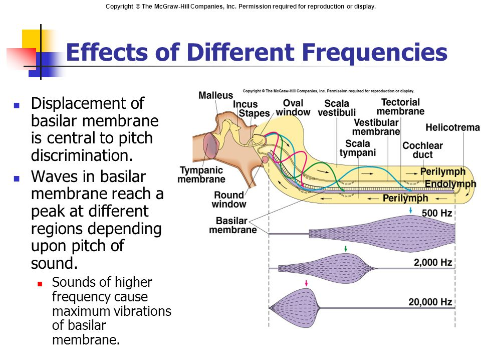Effects of Different Frequencies