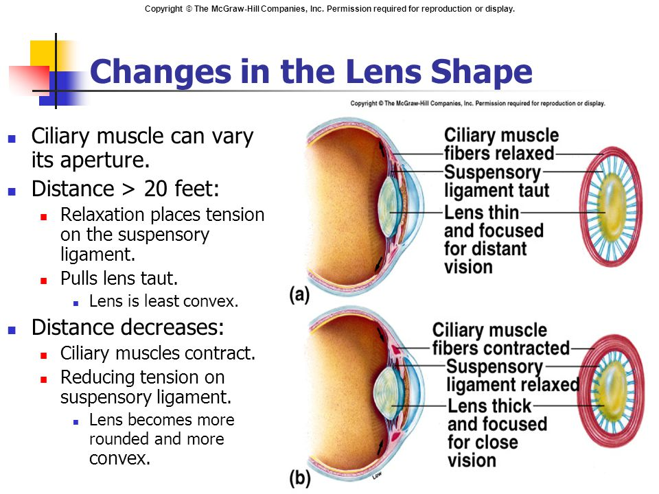 Changes in the Lens Shape