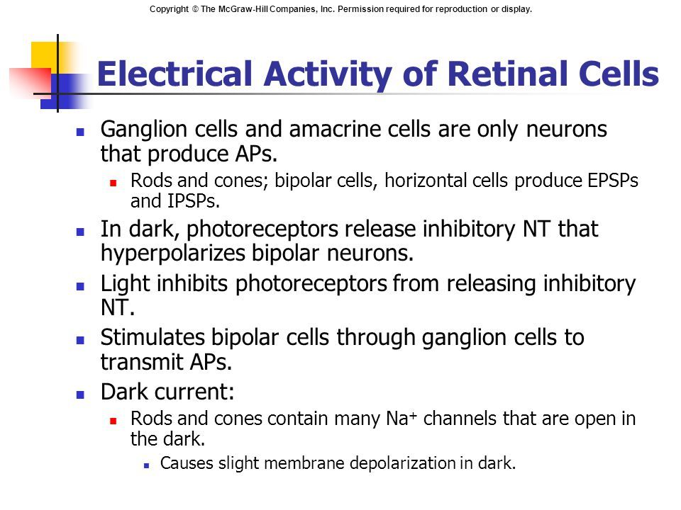 Electrical Activity of Retinal Cells