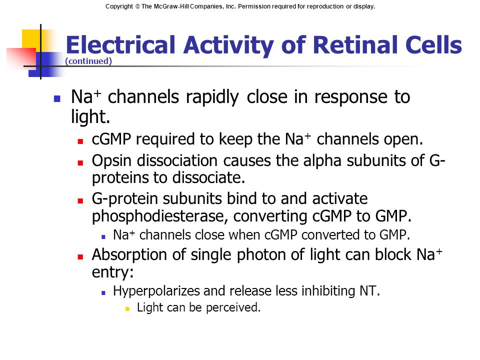 Electrical Activity of Retinal Cells (continued)