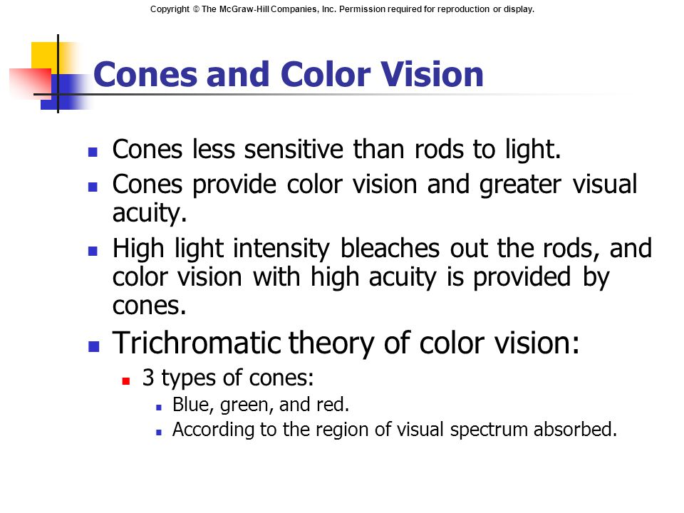 Cones and Color Vision Trichromatic theory of color vision: