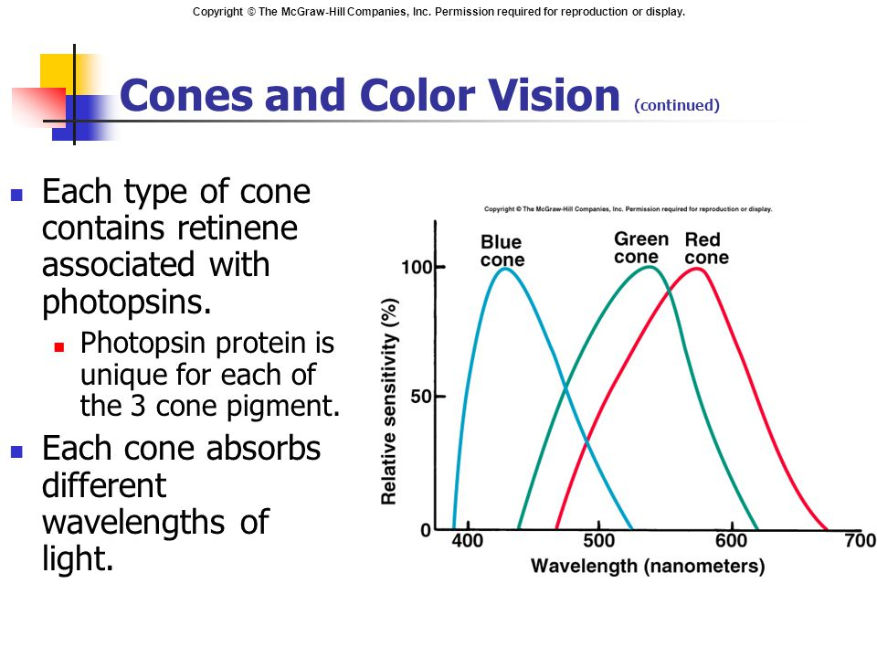Cones and Color Vision (continued)