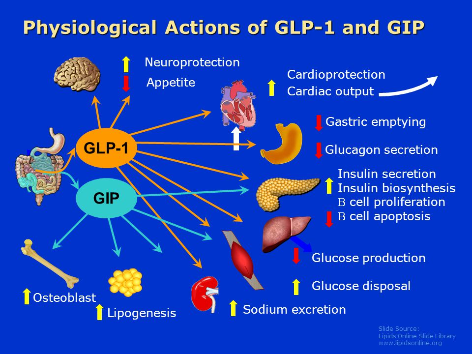 Physiological Actions of GLP-1 and GIP