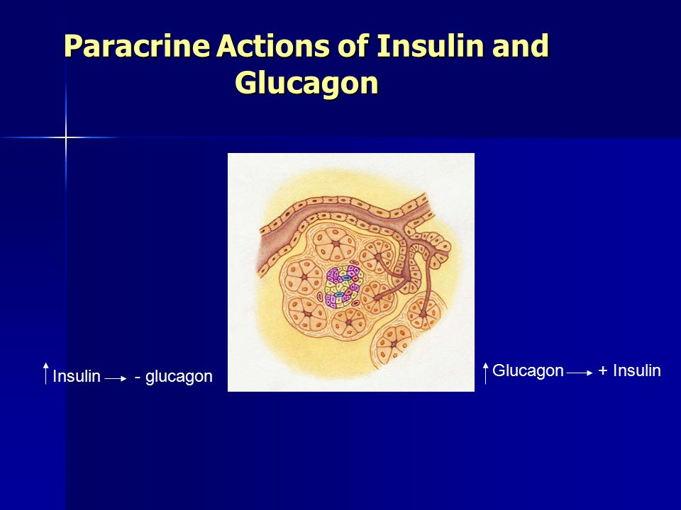 Paracrine Actions of Insulin and Glucagon