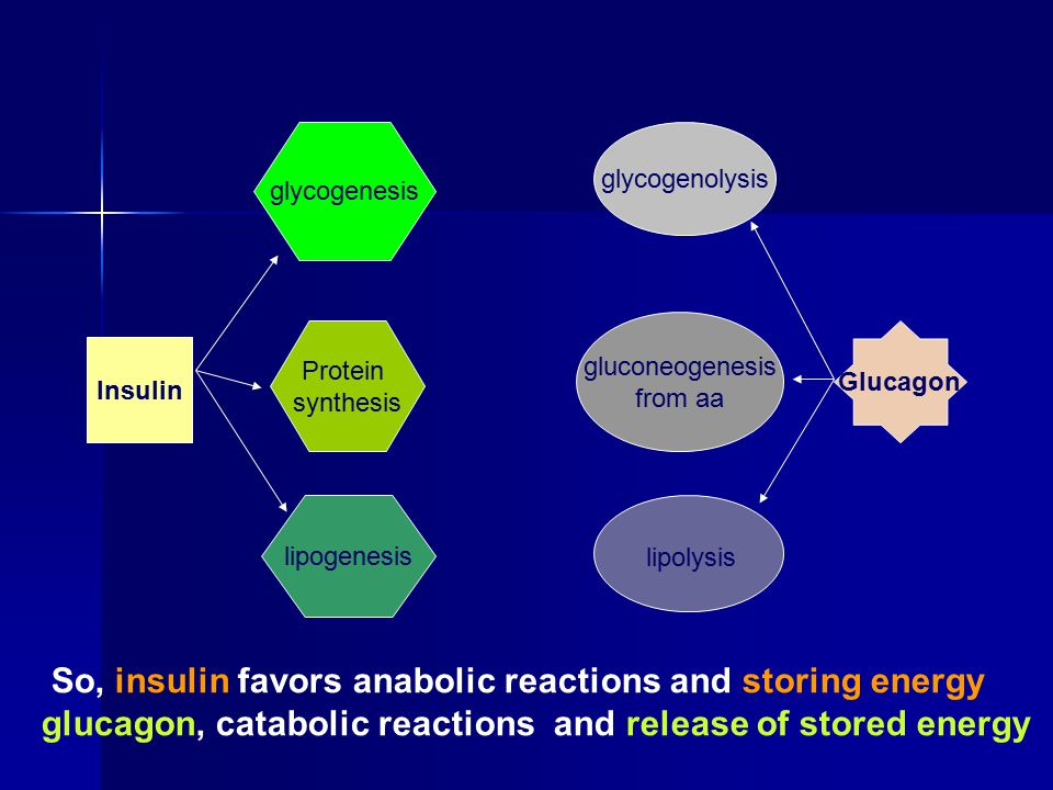 So, insulin favors anabolic reactions and storing energy