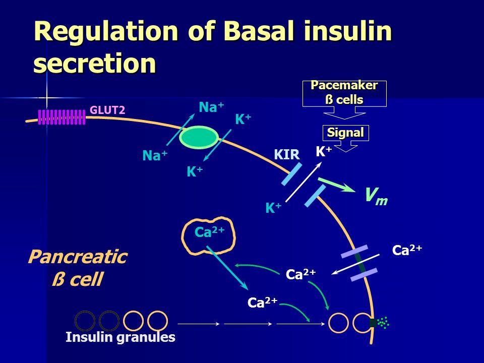 Regulation of Basal insulin secretion