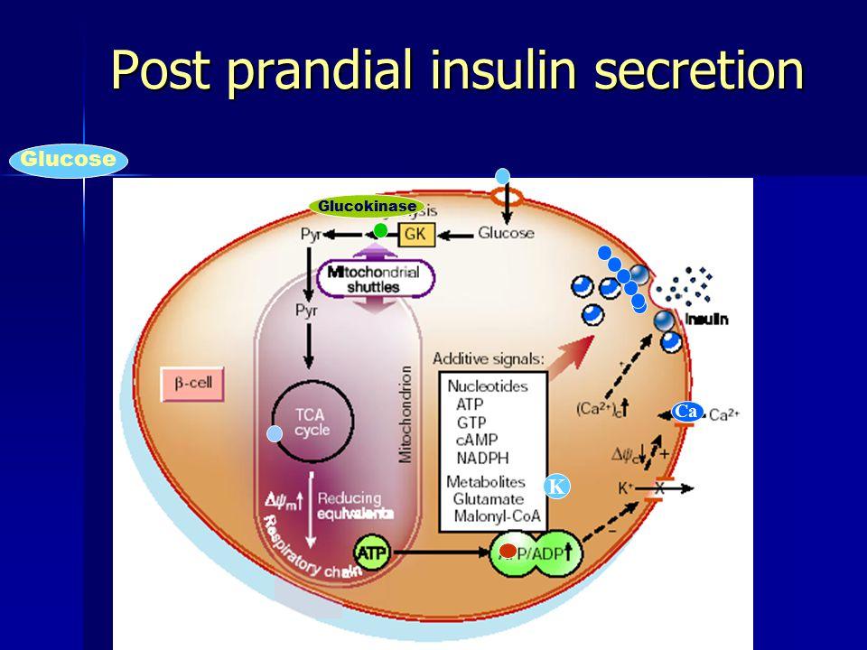 Post prandial insulin secretion