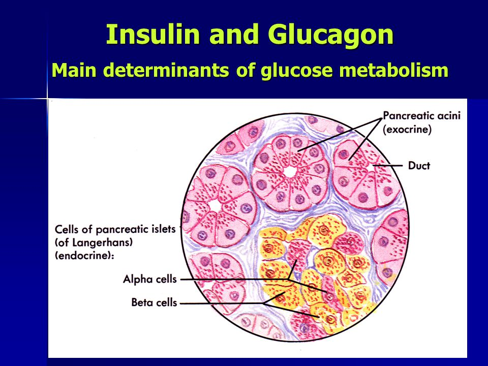 Main determinants of glucose metabolism