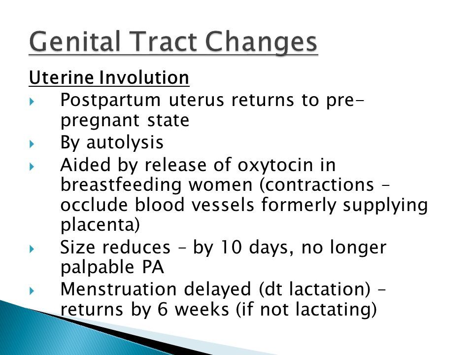 Genital Tract Changes Uterine Involution