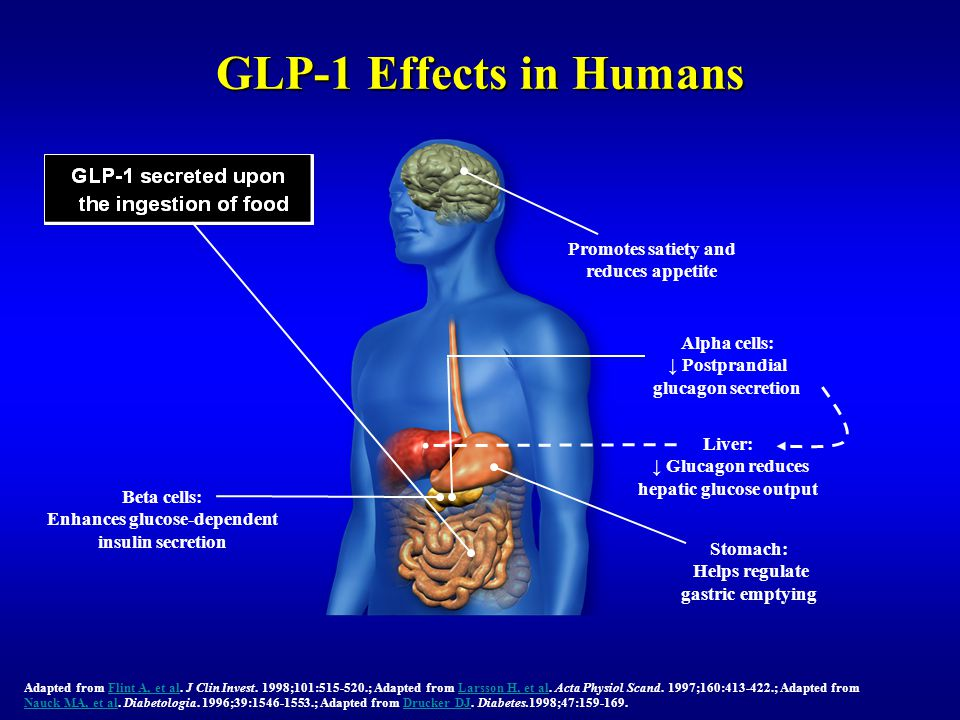 GLP-1 Effects in Humans Promotes satiety and reduces appetite