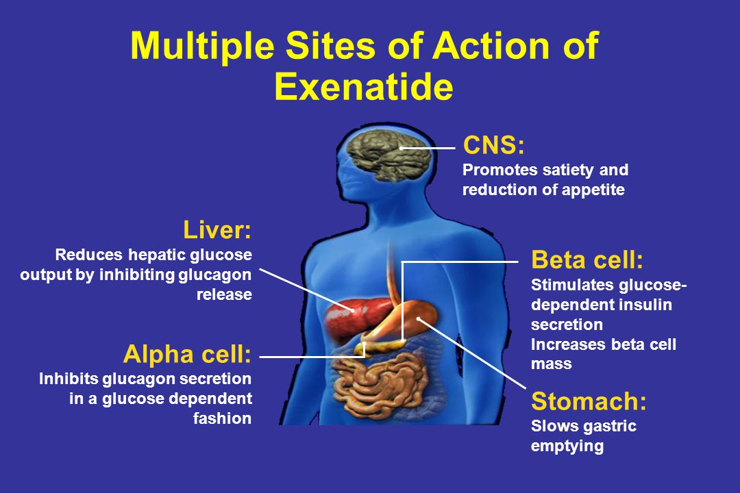 Multiple Sites of Action of Exenatide