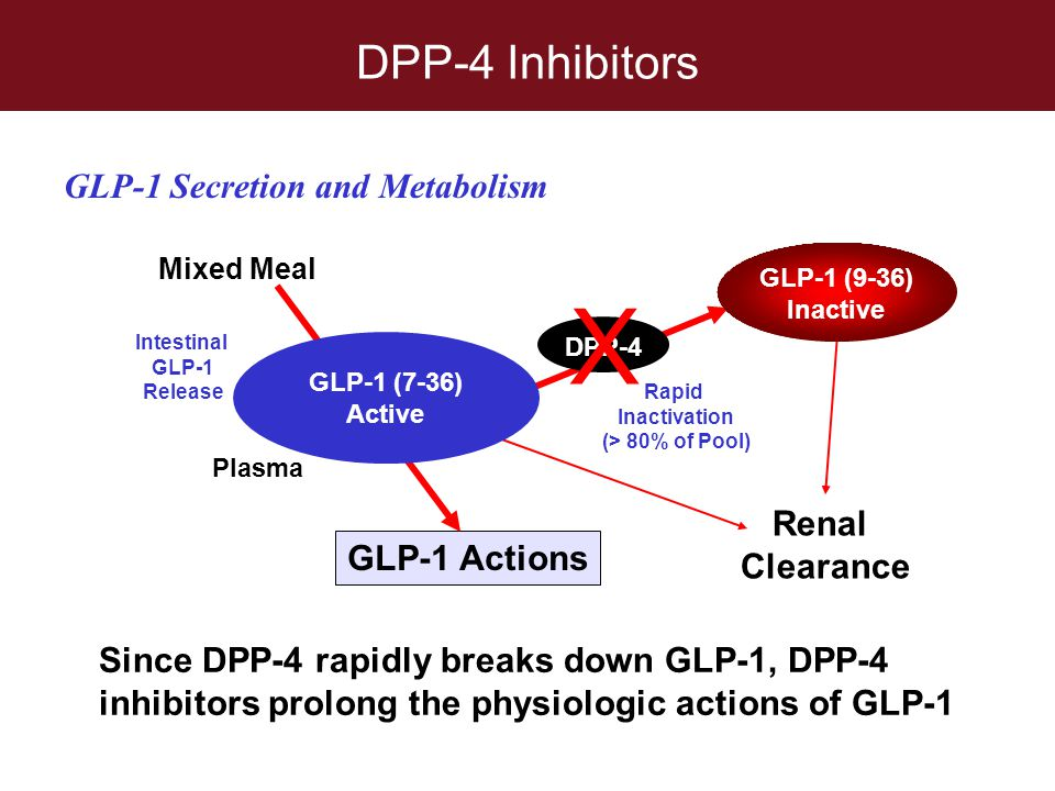 Intestinal GLP-1 Release Rapid Inactivation (> 80% of Pool)
