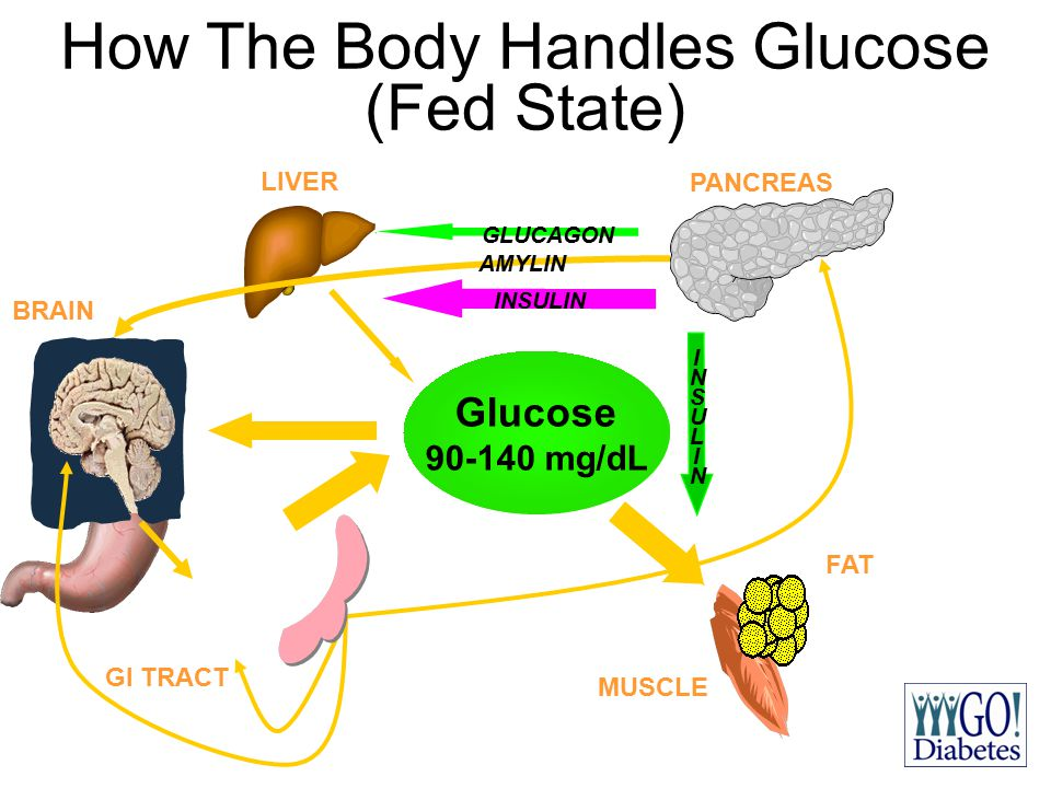How The Body Handles Glucose