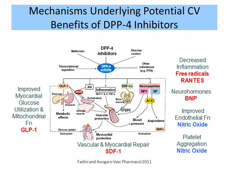 Mechanisms Underlying Potential CV Benefits of DPP-4 Inhibitors