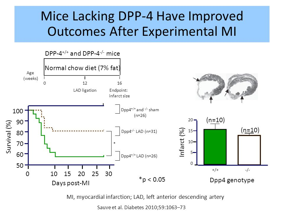 Mice Lacking DPP-4 Have Improved Outcomes After Experimental MI