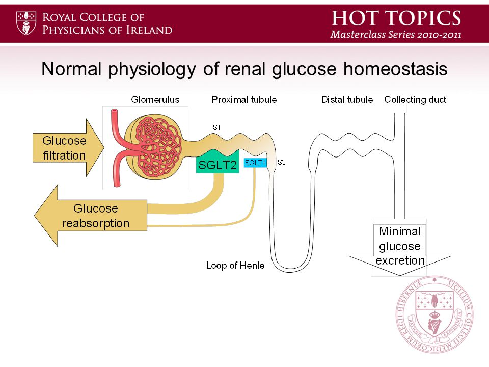 Normal physiology of renal glucose homeostasis