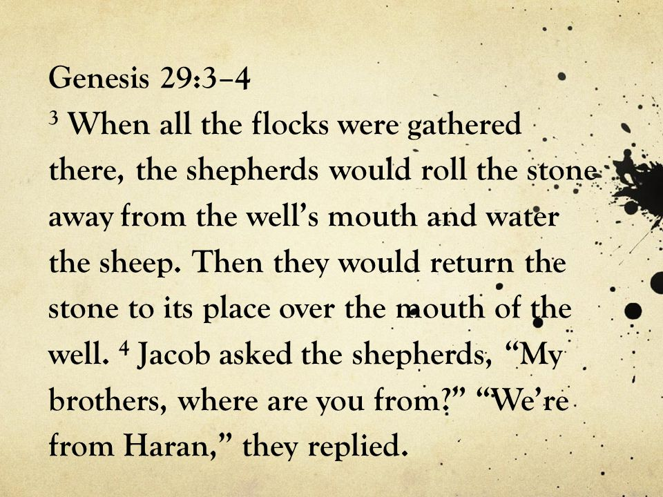 Genesis 29:3–4 3 When all the flocks were gathered there, the shepherds would roll the stone away from the well's mouth and water the sheep.
