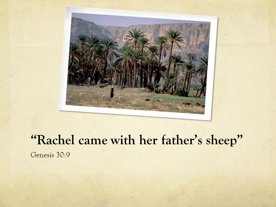 Rachel came with her father's sheep