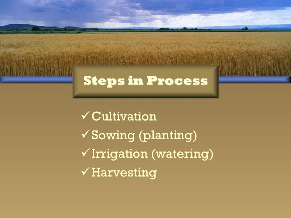 Steps in Process Cultivation Sowing (planting) Irrigation (watering) Harvesting