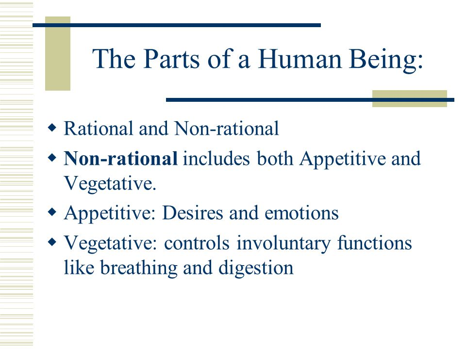 The Parts of a Human Being: