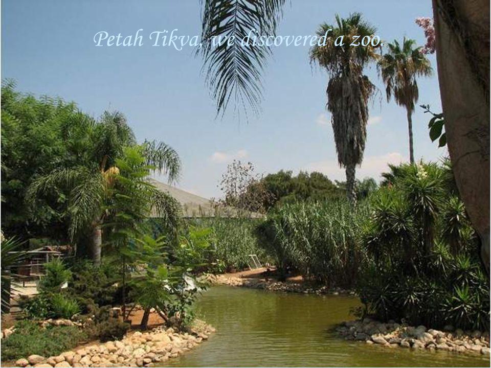 Petah Tikva, we discovered a zoo.