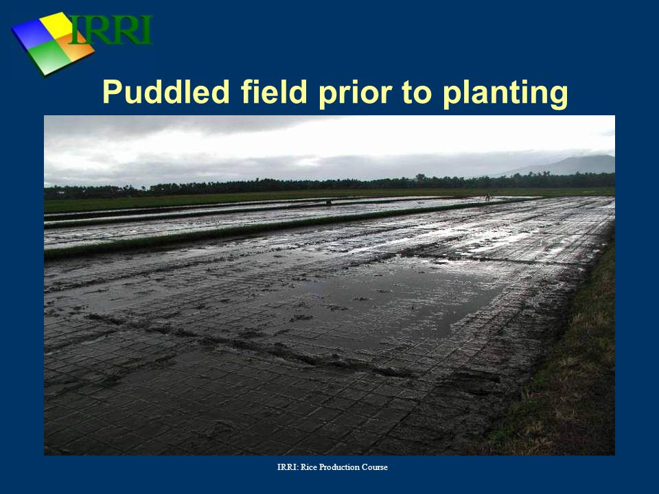 Puddled field prior to planting