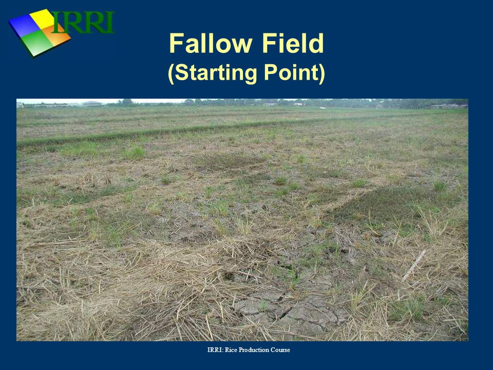 Fallow Field (Starting Point)