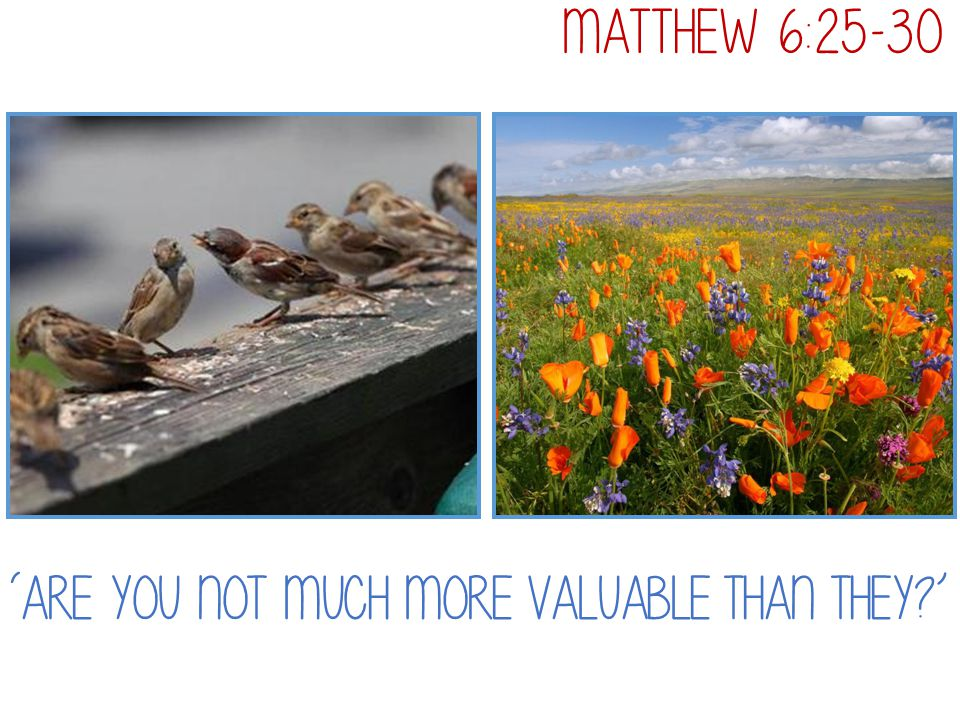 Matthew 6:25-30 'Are you not much more valuable than they '