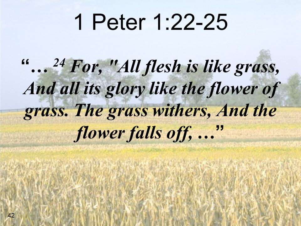 1 Peter 1:22-25 … 24 For, All flesh is like grass, And all its glory like the flower of grass.