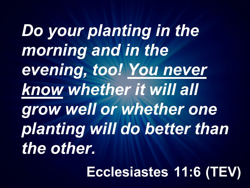Do your planting in the morning and in the evening, too
