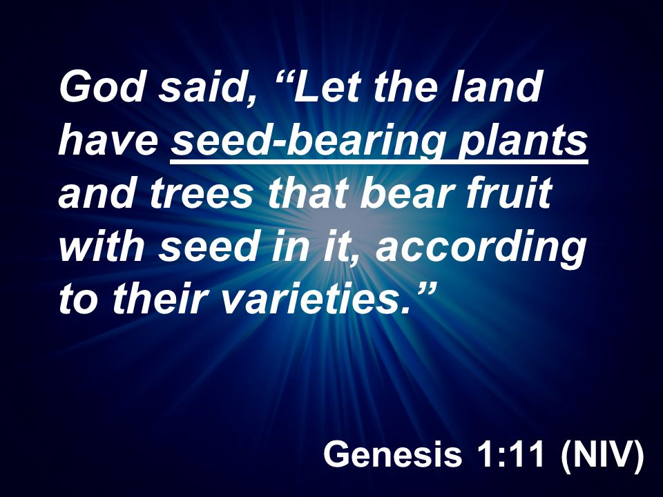 God said, Let the land have seed-bearing plants and trees that bear fruit with seed in it, according to their varieties.