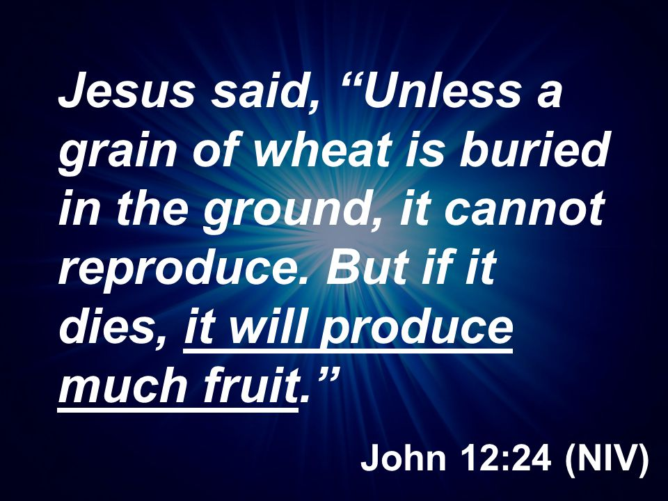 Jesus said, Unless a grain of wheat is buried in the ground, it cannot reproduce. But if it dies, it will produce much fruit.