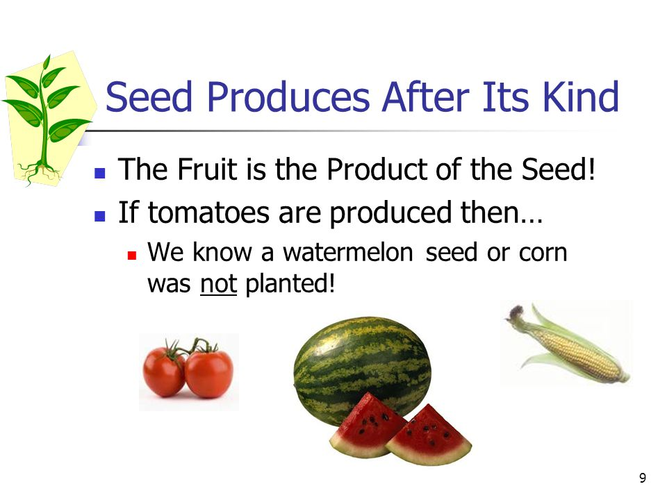 Seed Produces After Its Kind