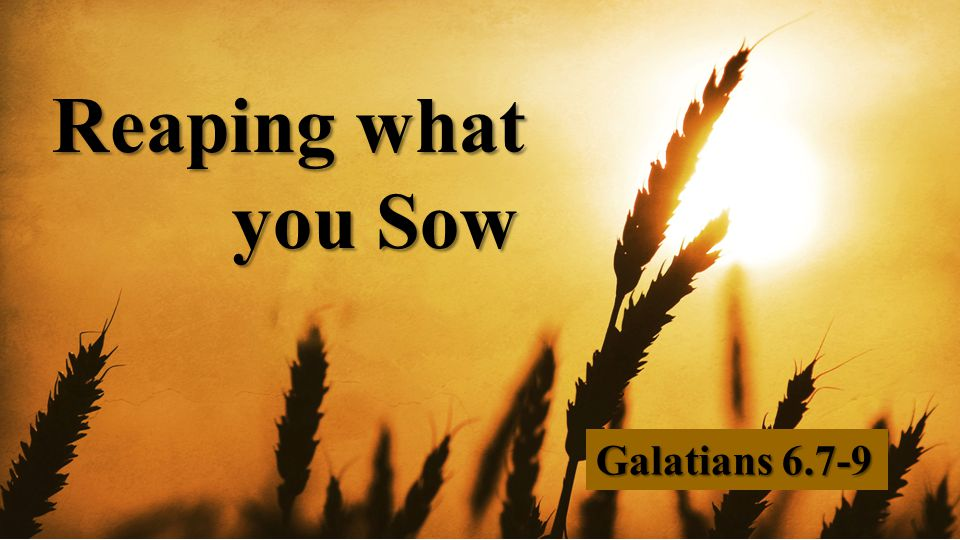Reaping what you Sow Galatians 6.7-9
