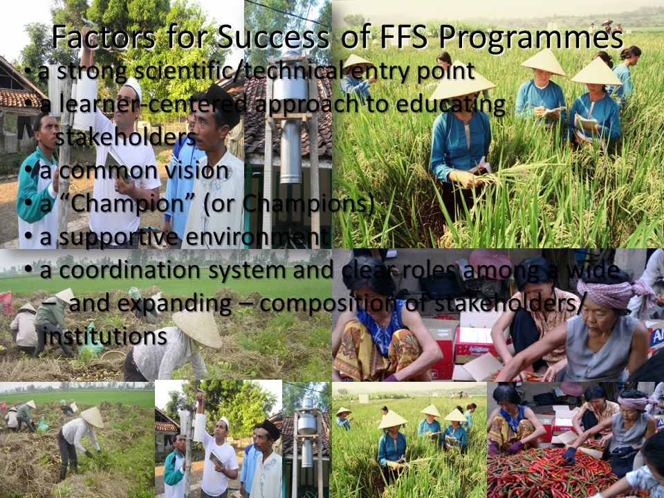 Factors for Success of FFS Programmes