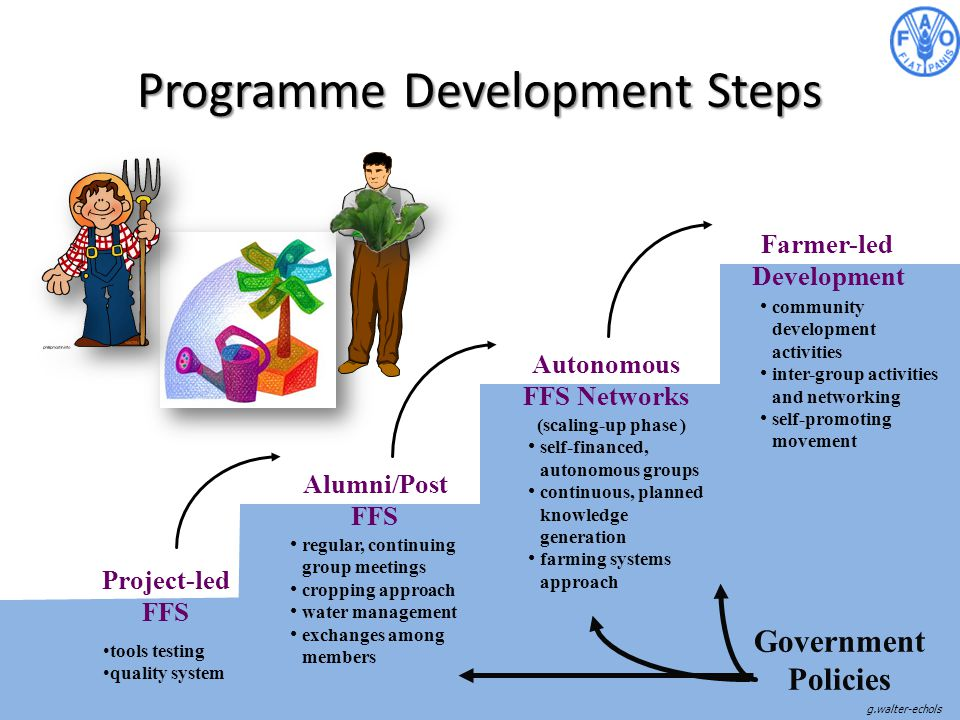 Programme Development Steps