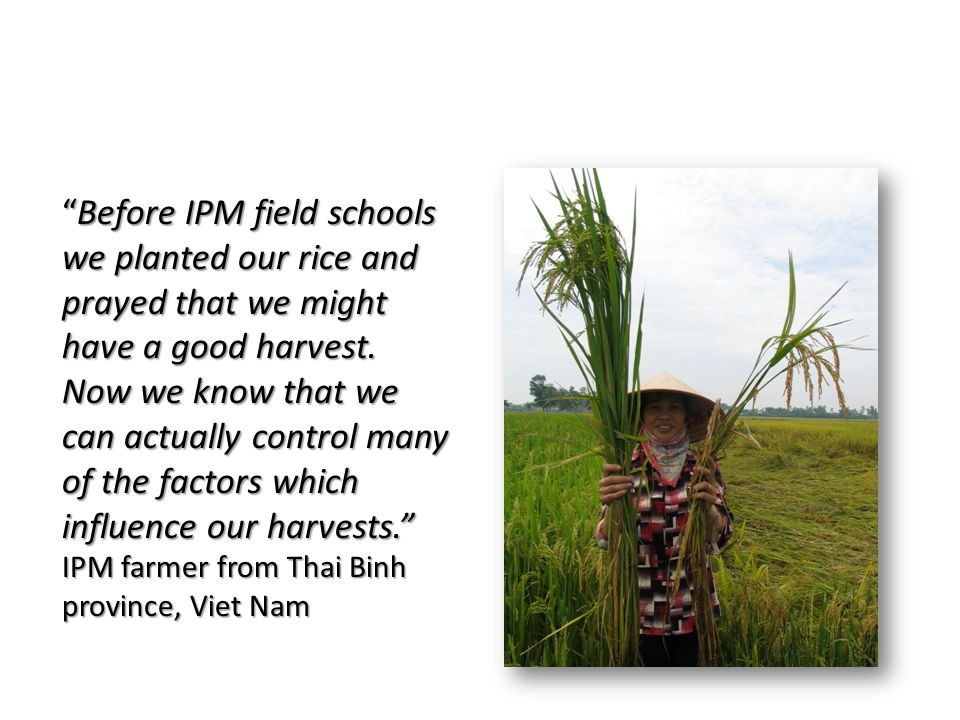 Before IPM field schools we planted our rice and prayed that we might have a good harvest.