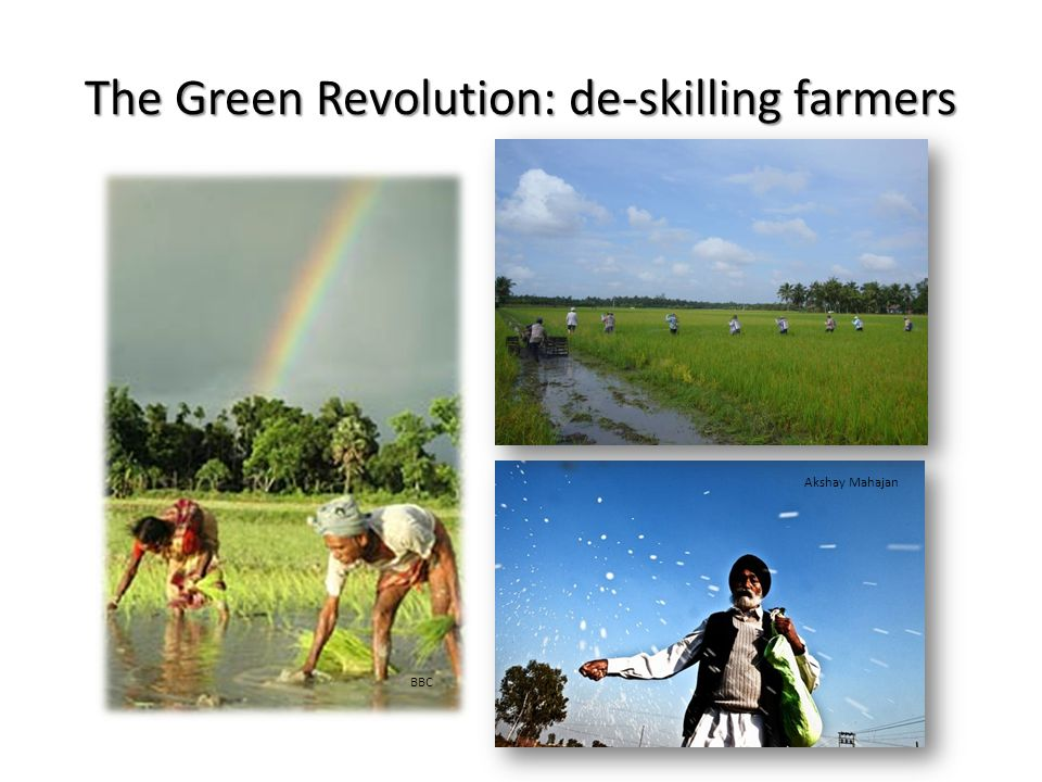 The Green Revolution: de-skilling farmers