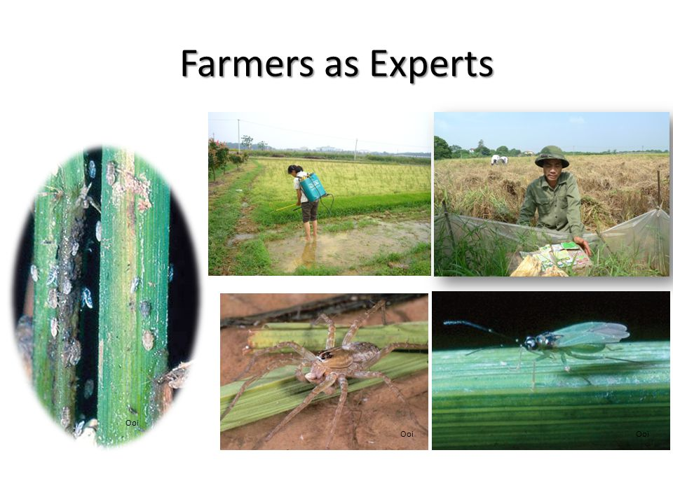 Farmers as Experts Ooi Ooi Ooi