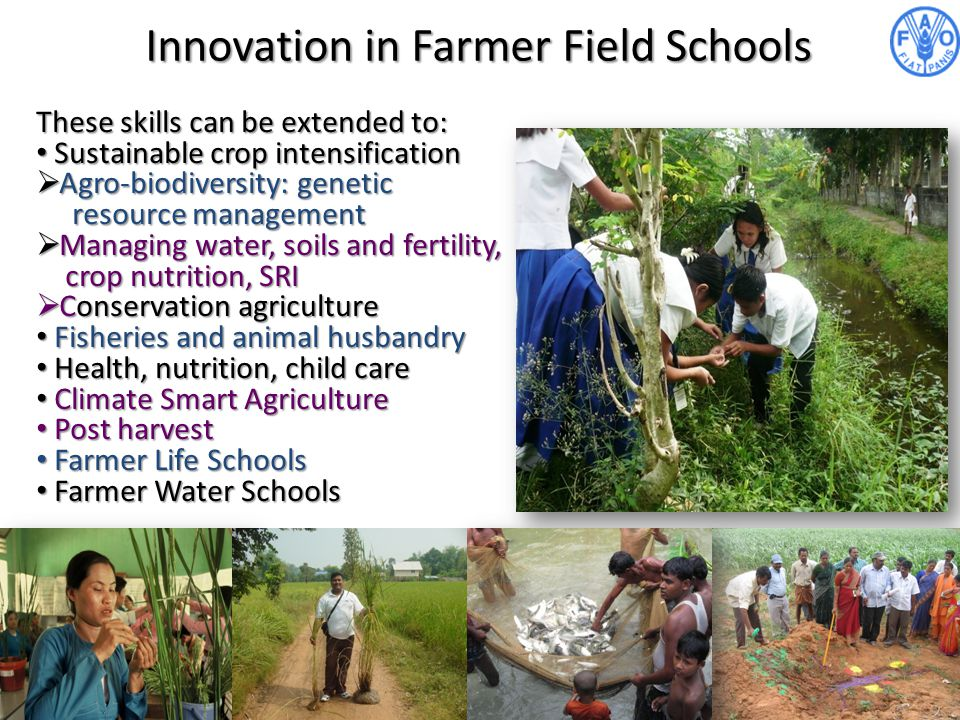 Innovation in Farmer Field Schools