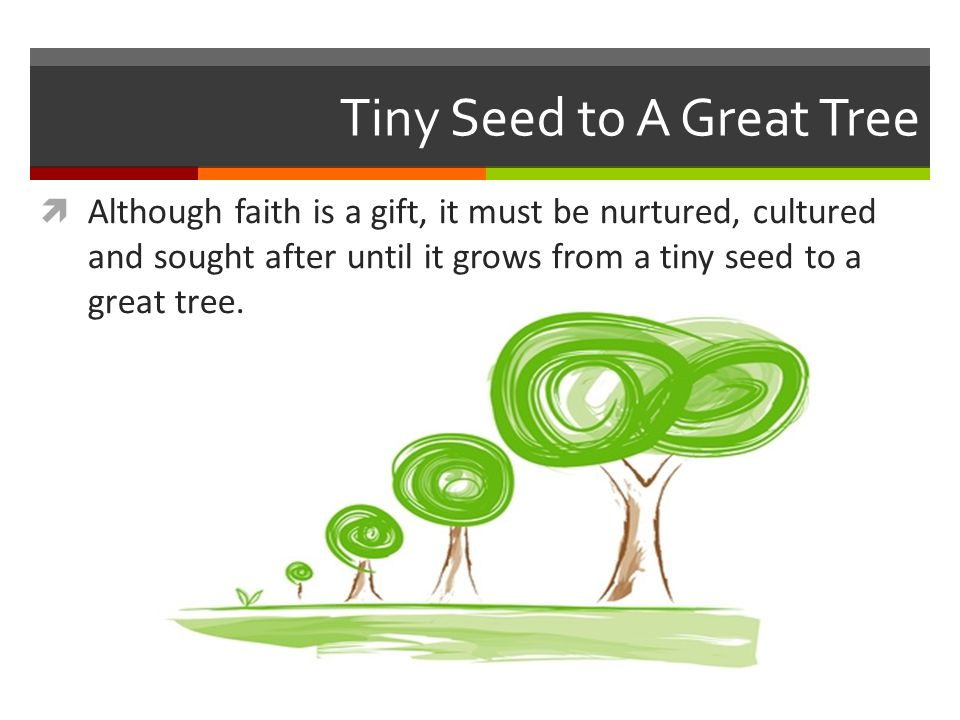 Tiny Seed to A Great Tree
