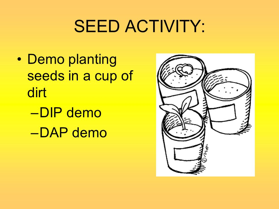 SEED ACTIVITY: Demo planting seeds in a cup of dirt DIP demo DAP demo