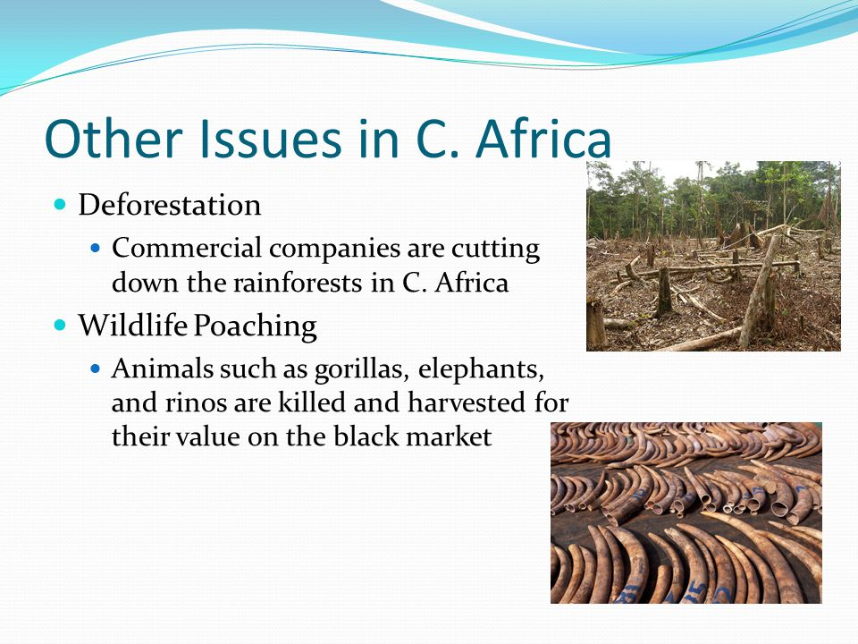 Other Issues in C. Africa