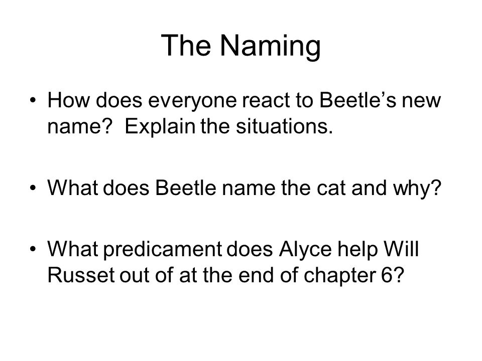 The Naming How does everyone react to Beetle's new name Explain the situations. What does Beetle name the cat and why