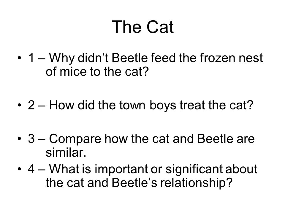 The Cat 1 – Why didn't Beetle feed the frozen nest of mice to the cat