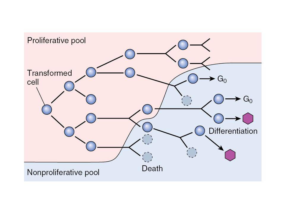 FIGURE 7-11 Schematic representation of tumor growth