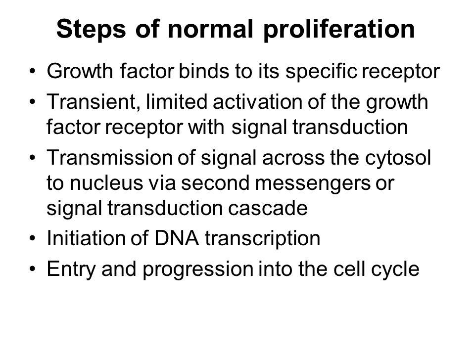Steps of normal proliferation