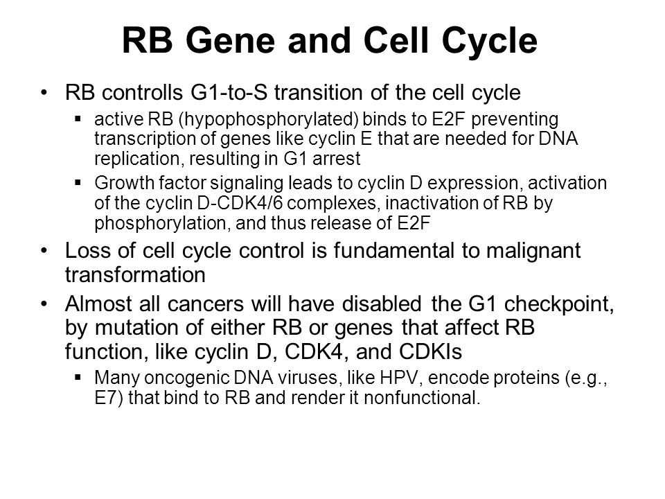 RB Gene and Cell Cycle RB controlls G1-to-S transition of the cell cycle.